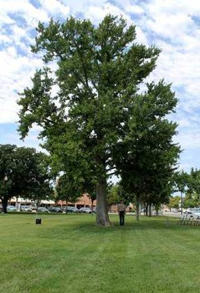 Boyscout-and-tree