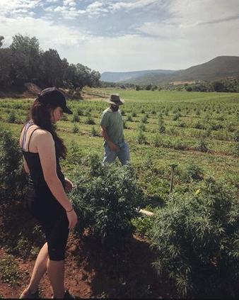 new_vlc_bolsenga-farm-2.gif