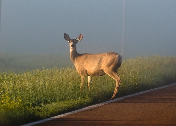 new_re_deer Crashes.jpg