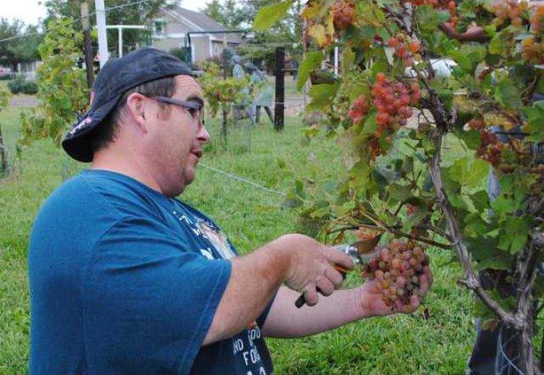 biz slt dawes grape standalone