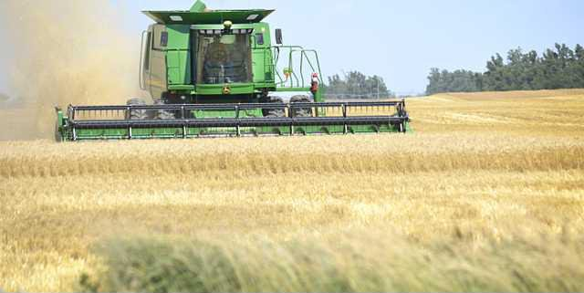 new deh wheat harvest update pic