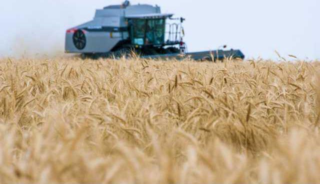 new hg wheatharvest1