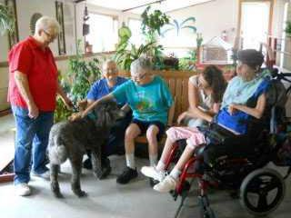 new slt dog therapy