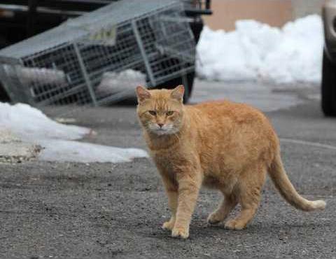 new vlc feral cat courtesy photo for Hoisington TNR