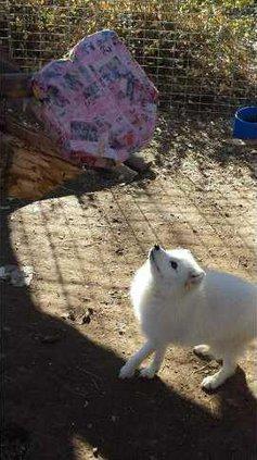 zoo courtesy fox