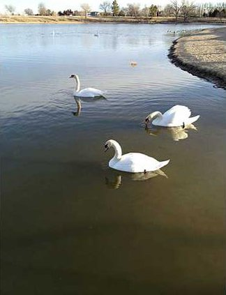 zoo deh shella-talbot-swan-pic