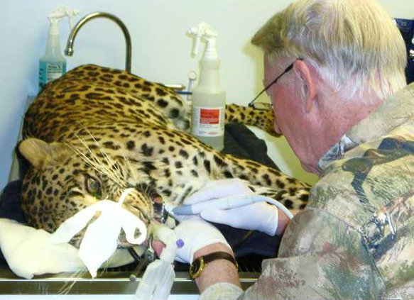 zoo slt leopard MAIN-pic-dentist