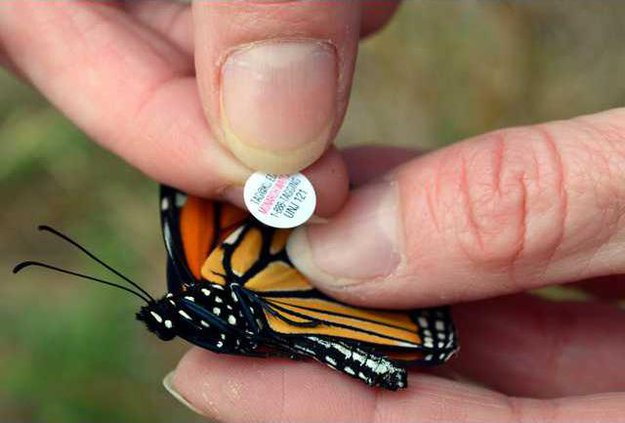 new lgp monarchmaniapic1