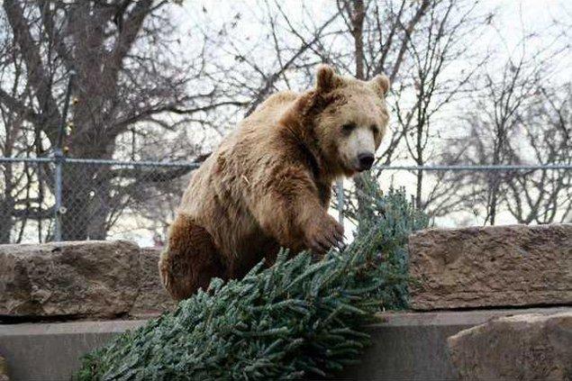 zoo-bear