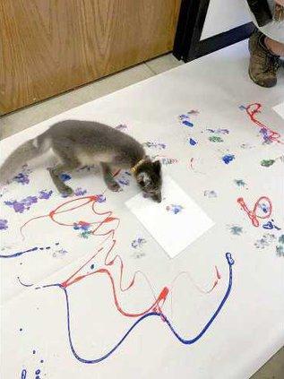 zoo fox paintings