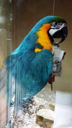 zoo slt macaw