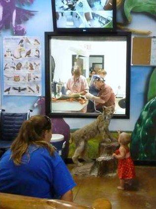 zoo watching proceedures