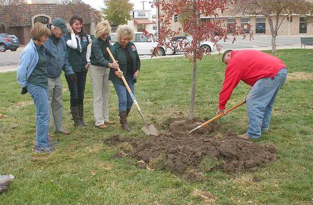 new deh tree for chuck planting pic