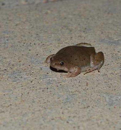 new lgp frogwatchpic