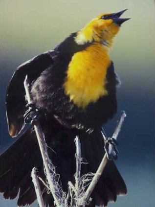 new slt barton arts bird