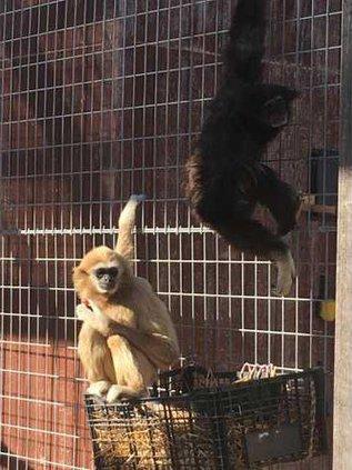 new slt zoo animals
