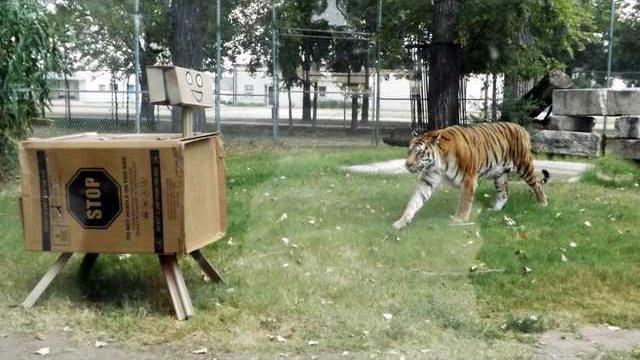 new slt zoo standalone
