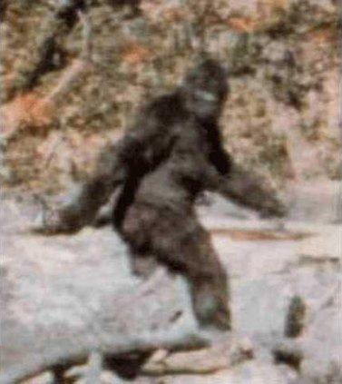 otm vlc bigfoot-PattersonGimlin film frame 352.gif