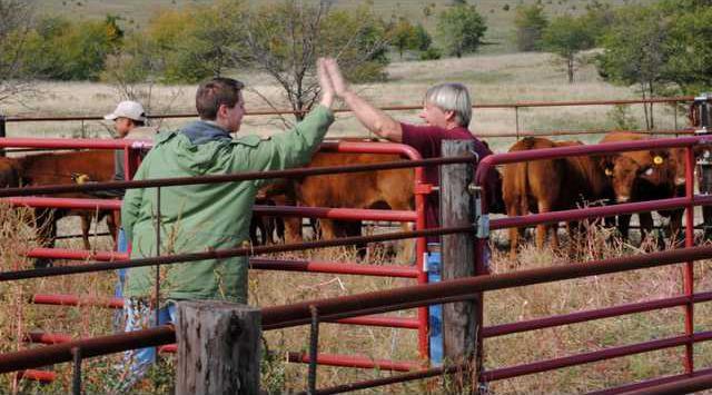 biz slt cattle herding