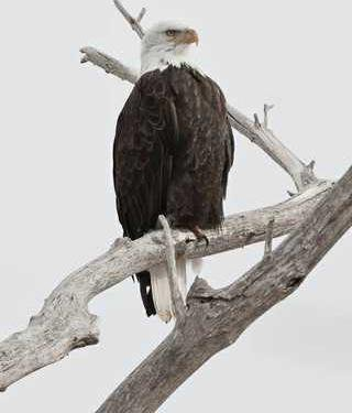 hoi kl eagle