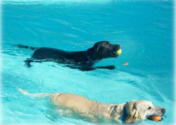 paw jm Dog Swim 2014