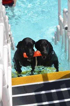 paw jm dogs pool2