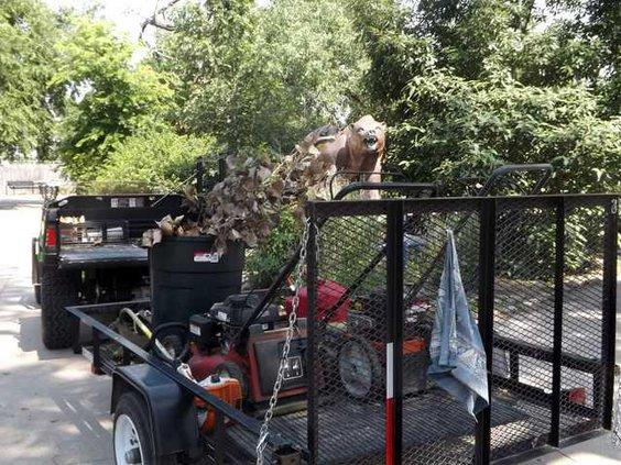 zoo slt bear and mower