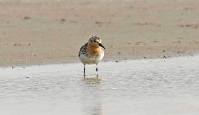 new deh red neck stint pic