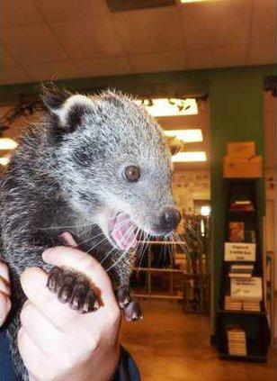 new slt bearcat
