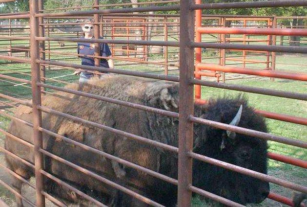 new deh buffalo main pic