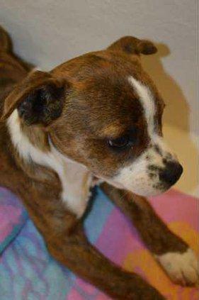 new kl adopt a dog