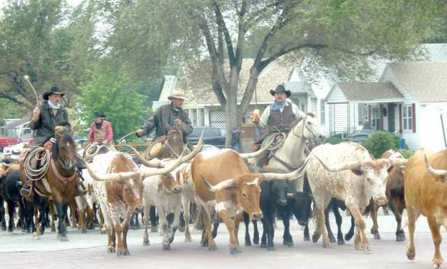 cattle drive 021