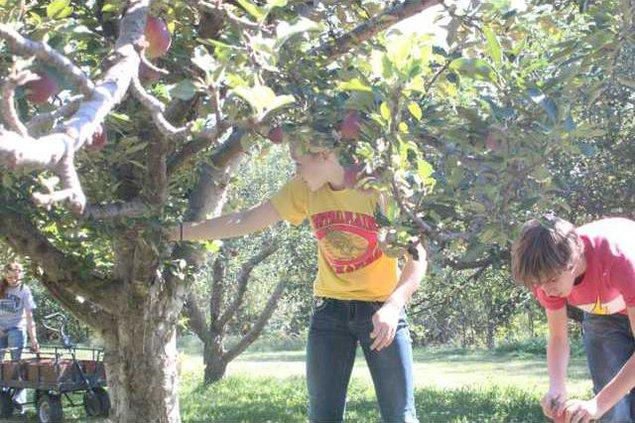 cla kl apple picking 1