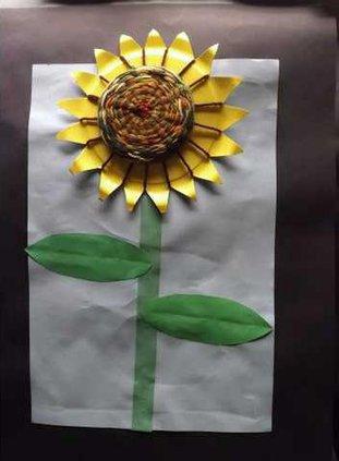 d-first-sunflower