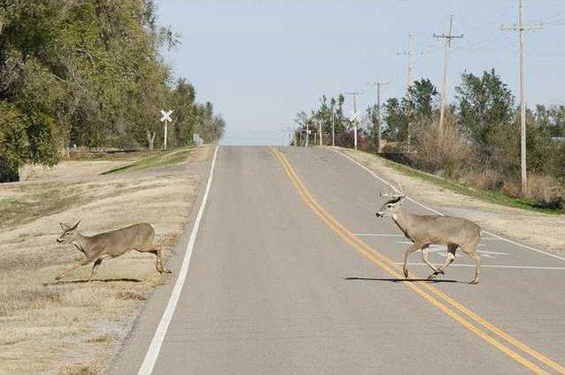 new deh deer rutting pic