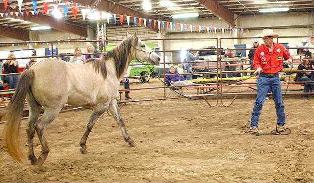 new deh farm show horse pic