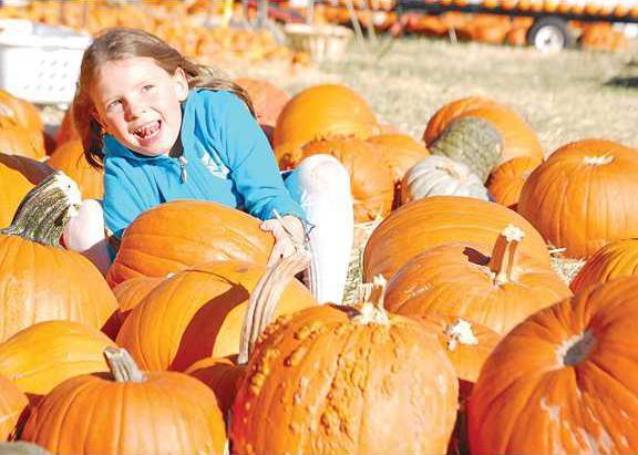 new deh pumpkin pic web