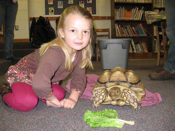 ell kl  tortoise 2