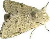 new deh moth pic