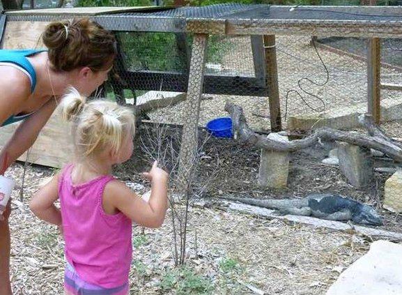 zoo slt kid sees iguana