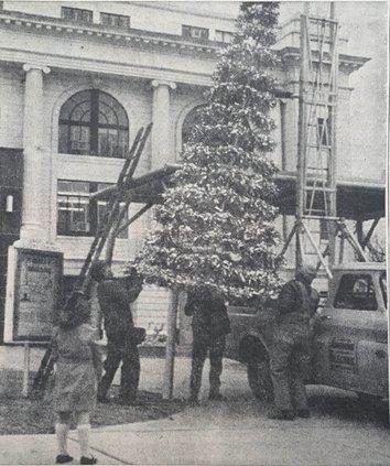 otm_vlc_christmas tree photo.jpg