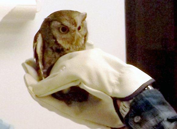 _ owl.jpg