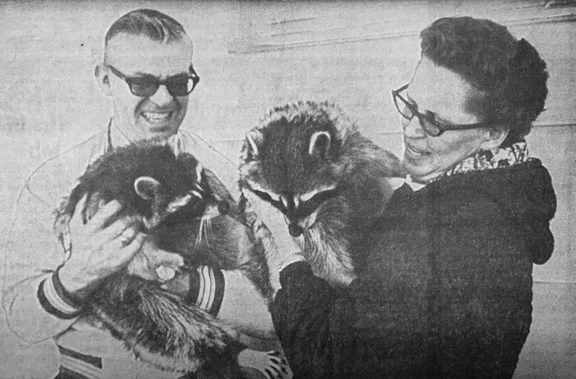 otm_Vlc_raccoons.jpg