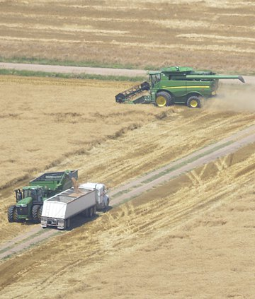 new_deh_wheat harvest update photo.jpg