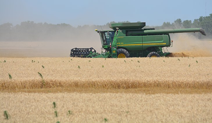 wheat cutting July 2 2019