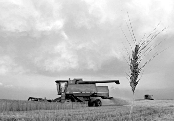 agri_ap_wheat acres.jpg