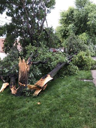 tree damage pic