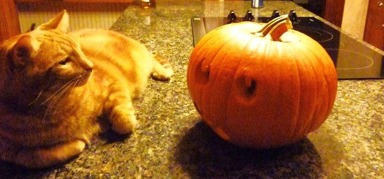 Sweet Tater Halloween
