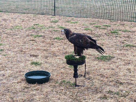 new_vlc_Dexter eagle.jpg