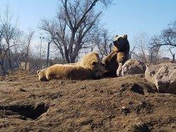 Piglet Winnie and Pooh sun nap